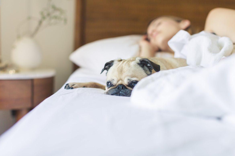 jak sie wyspać endometrioza mops w łóżku