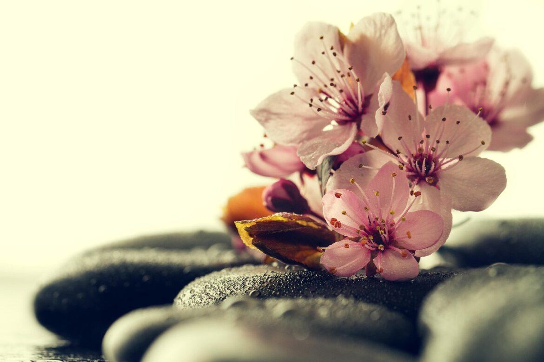 kwiaty na kamieniach na wodzie