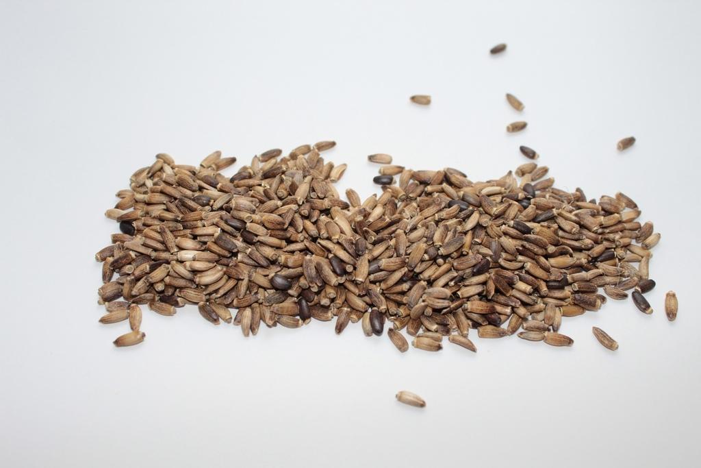 nasiona-ostropestu-wlasciwosci-badz-soba-z-choroba-bodylogika